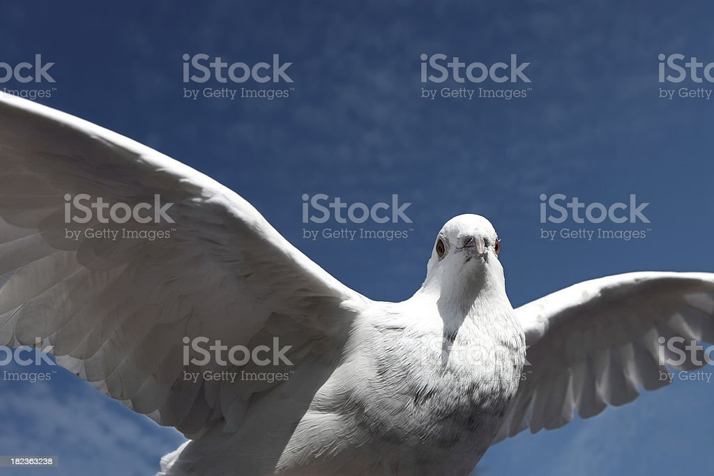 When doves fly royalty-free stock photo