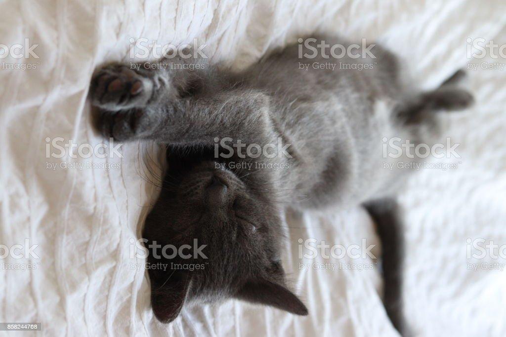 when henry sleeps stock photo