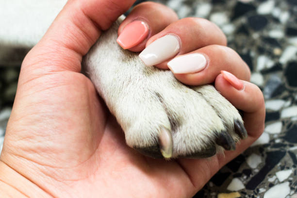 When I needed a hand I found your paw stock photo