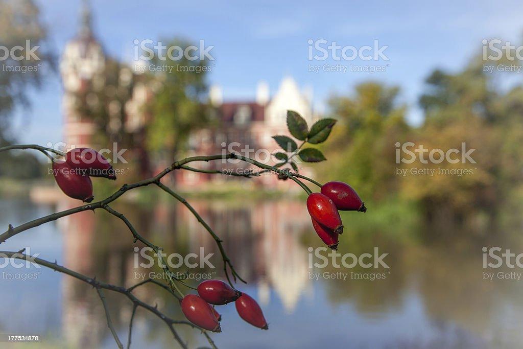 When the autumn comes stock photo