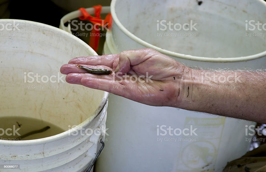 When the fishing's bad... royalty-free stock photo