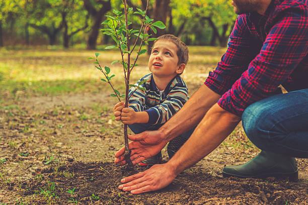 quando farà crescere? - piantare foto e immagini stock