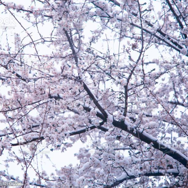 Photo of When winter meets spring