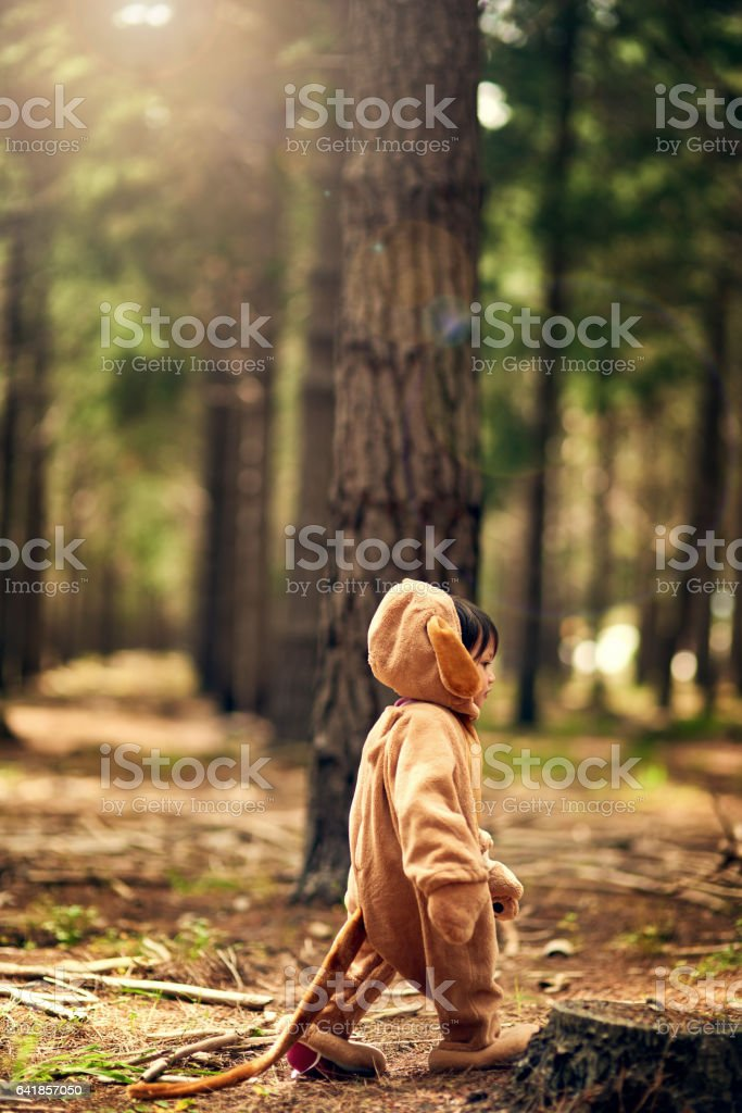 When you go into the woods today... stock photo