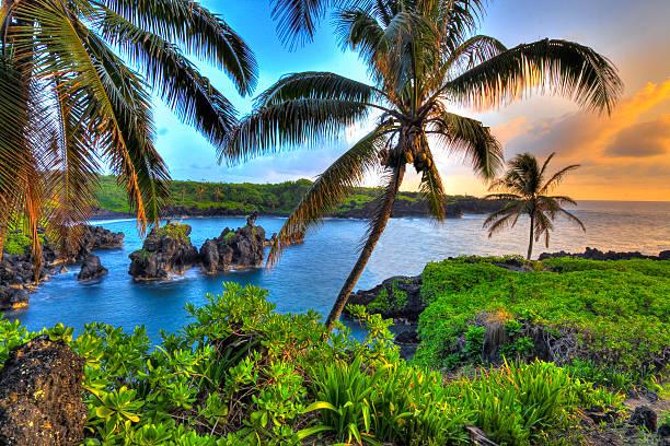 Where Coconuts Grow stock photo