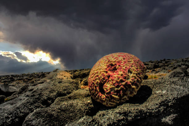 Where corals go when they die stock photo