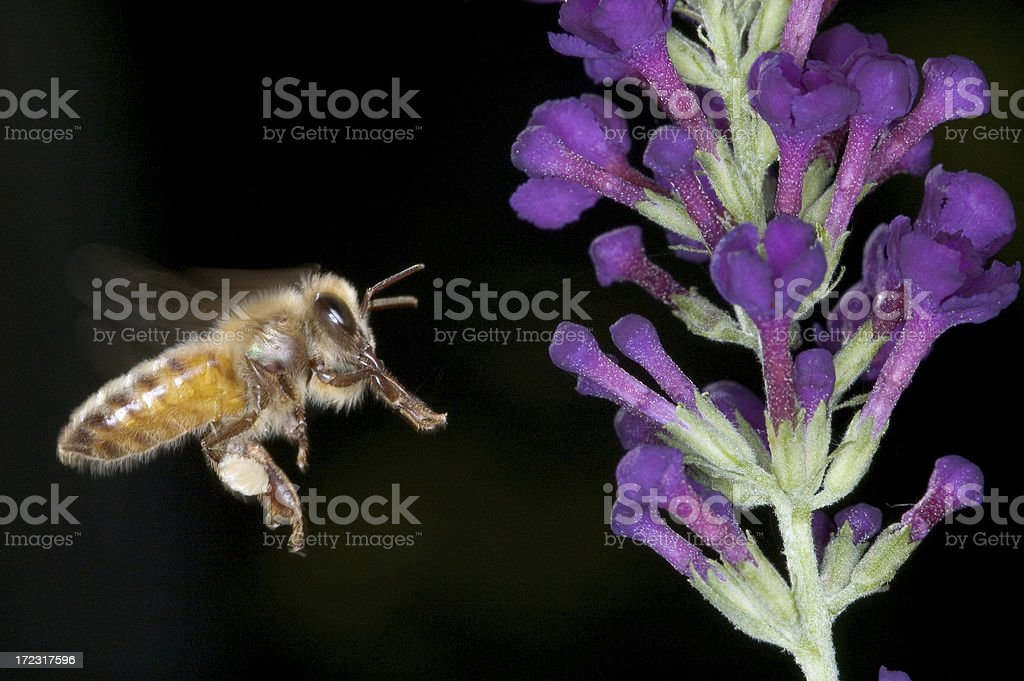 Where Have All The Bees Gone? royalty-free stock photo