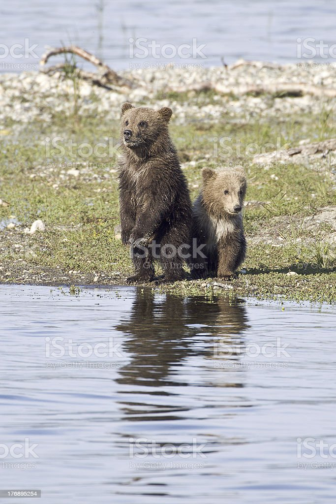 Where is Mom? royalty-free stock photo