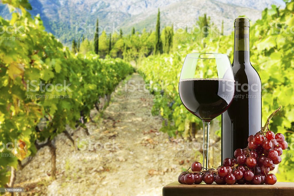 Where the best wine is done royalty-free stock photo
