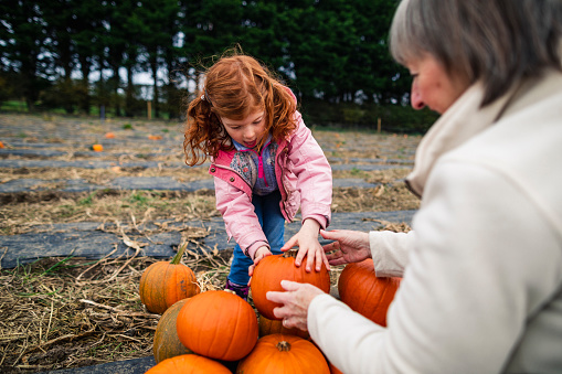 Grandmother and granddaughter pumpkin picking at a farm in Autumn dressed in warm clothes getting ready for halloween.