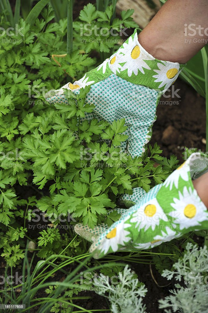 While gardening royalty-free stock photo