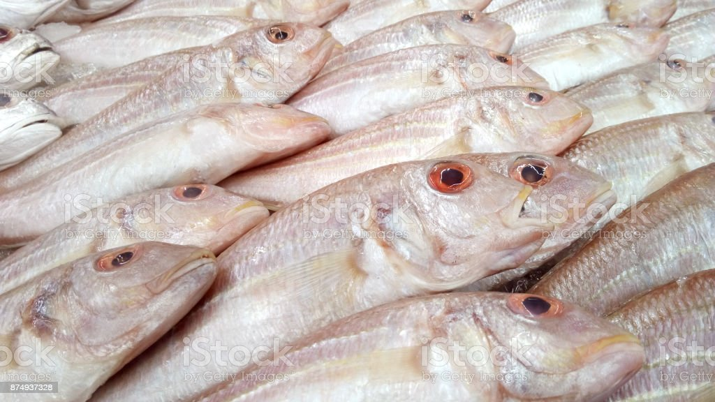 Whisker Sheatfish stock photo