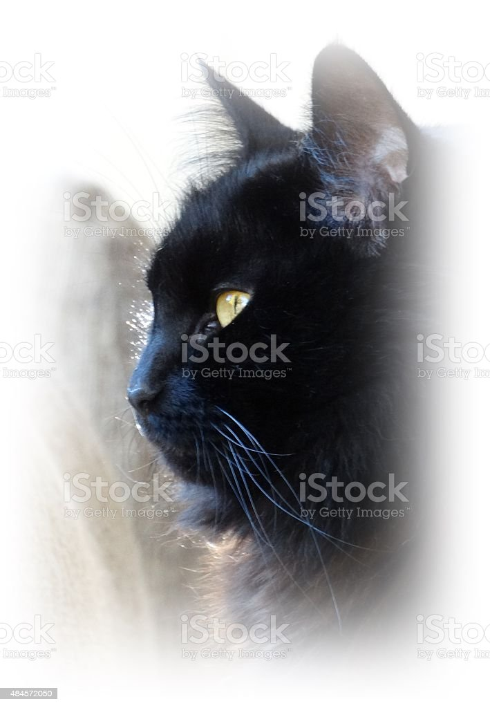Whiskers stock photo