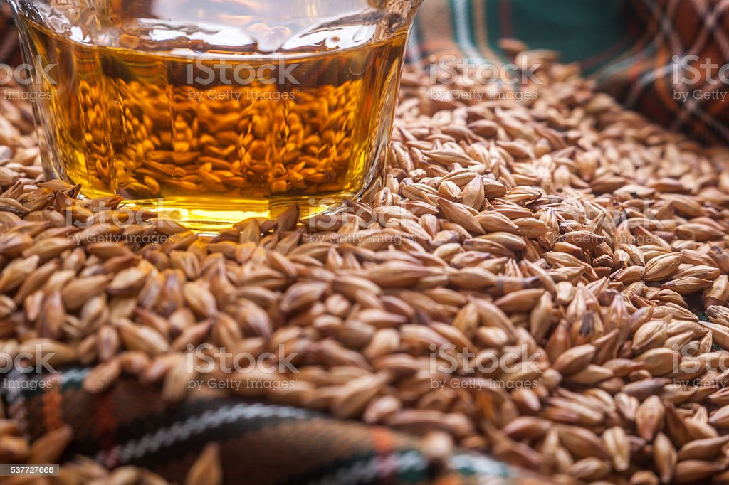 Whisky and grains stock photo