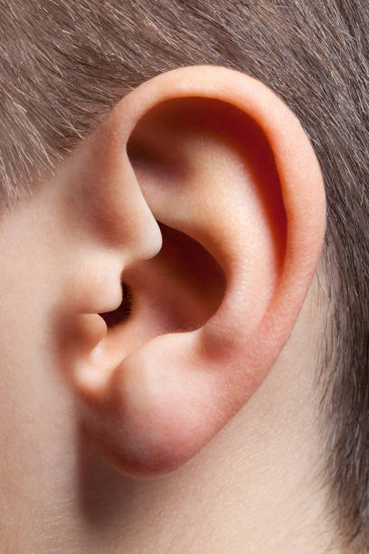 Whisper in ear. Ear in the shape of whispering face. Child's ear. Ear in the shape of whispering face. human ear stock pictures, royalty-free photos & images