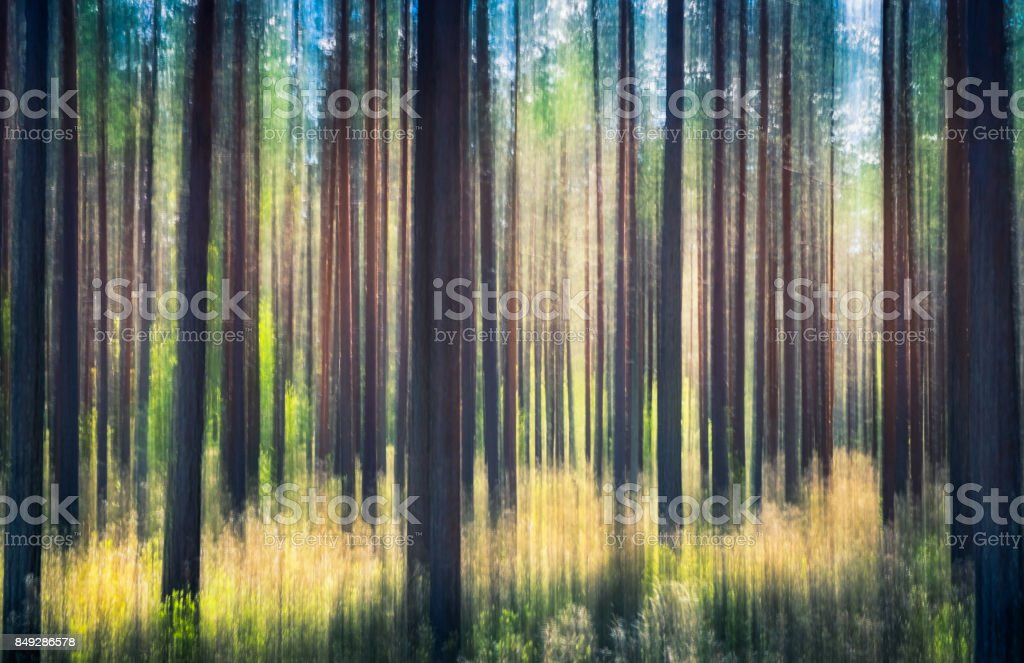 Whispering trees. This effect has been made by swinging the camera. This has been taken by sunny summer day in pine forest Nurmijärvi, Finland stock photo