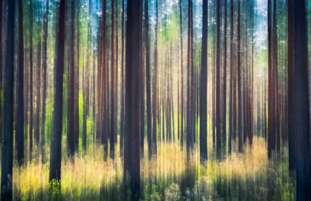 flüsternde bäume. dieser effekt wurde durch schwenken der kameras gemacht. dies wurde durch die sonnigen sommertag im pinienwald nurmijärvi, finnland berücksichtigt - bilder landschaften stock-fotos und bilder