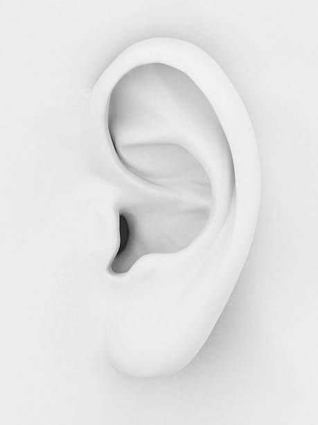 white 3d image of a mounded ear on white background - ear stock photos and pictures