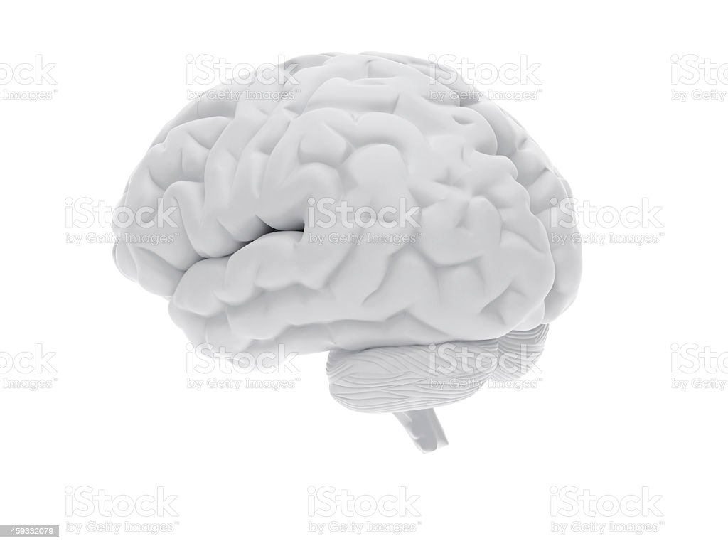 White 3D model of human brain on white background stock photo