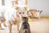 istock White adopted dog meeting cat 1157103637