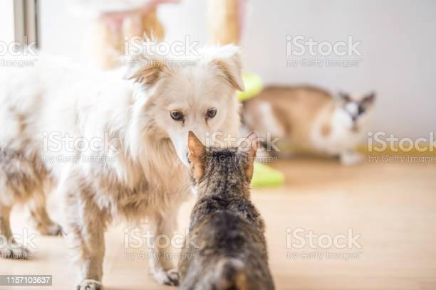 White adopted dog meeting cat picture id1157103637?b=1&k=6&m=1157103637&s=612x612&h=44mqeu1alpwiqcmswpylk1h6jisvr53lqpirfdqg3m4=