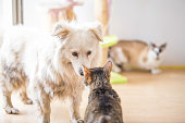 istock White adopted dog meeting cat 1157103639