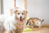 istock White adopted dog meeting cat 1157103697