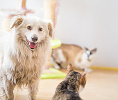 istock White adopted dog meeting cat 1157103699