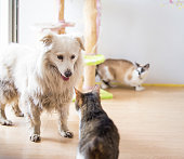 istock White adopted dog meeting cat 1157103806