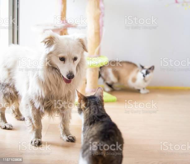 White adopted dog meeting cat picture id1157103806?b=1&k=6&m=1157103806&s=612x612&h=rznfz0ih3dxtk2soymx6pyzi09nxpzhlv8qlempvzsg=