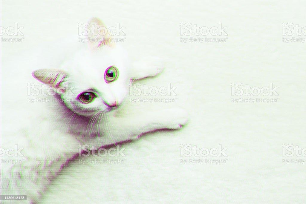 Gato adulto blanco con ojos amarillos sobre moquettes blandas. Efecto de error digital - foto de stock