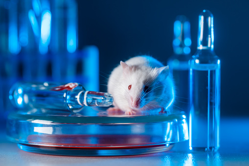 White albino laboratory mouse in a modern virological or immunological laboratory.