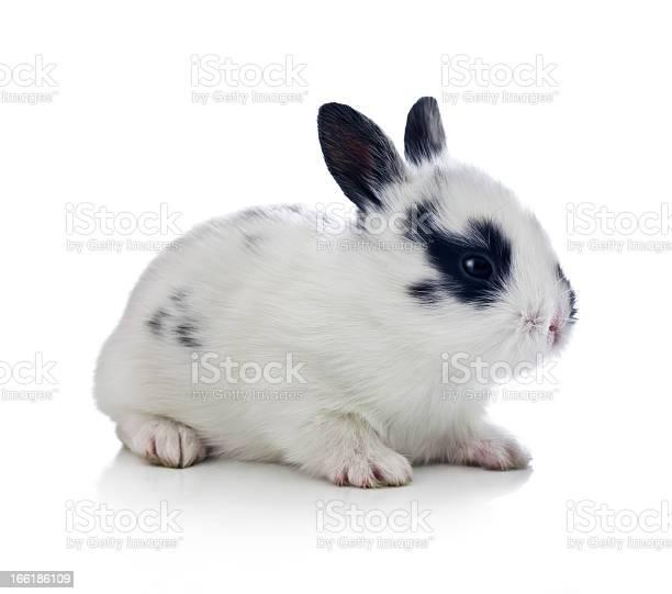 White and black baby bunny picture id166186109?b=1&k=6&m=166186109&s=612x612&h=vxehiemqq86recf6lm0qjpboaswjwkbwg1craozqybo=