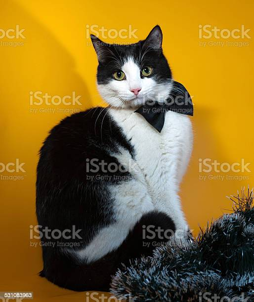 yellow and white stripped bow Black tinsel cat with orange