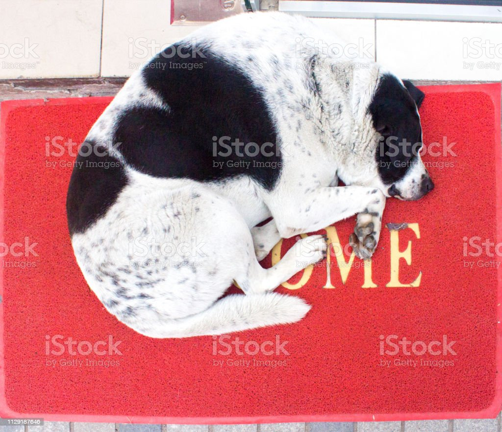 White and black dog with heart on the back laying on red carpet with...
