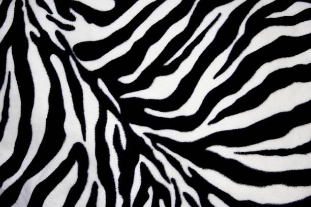 fundo de zebra - padrões zebra imagens e fotografias de stock