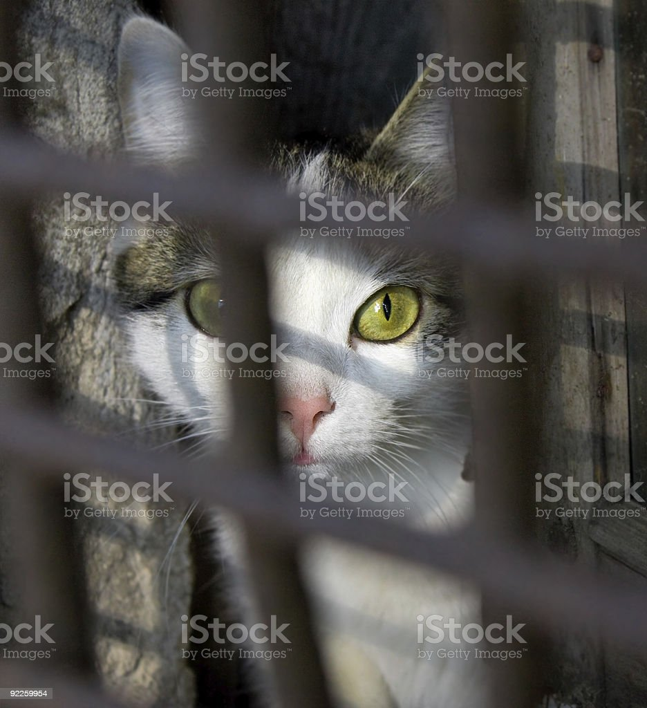 White and brown cat with yellow-green eyes inside a cage stock photo