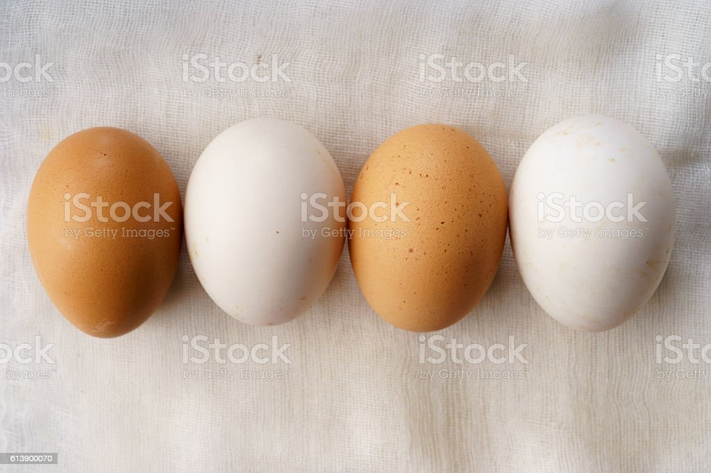 white and brown chicken eggs stock photo