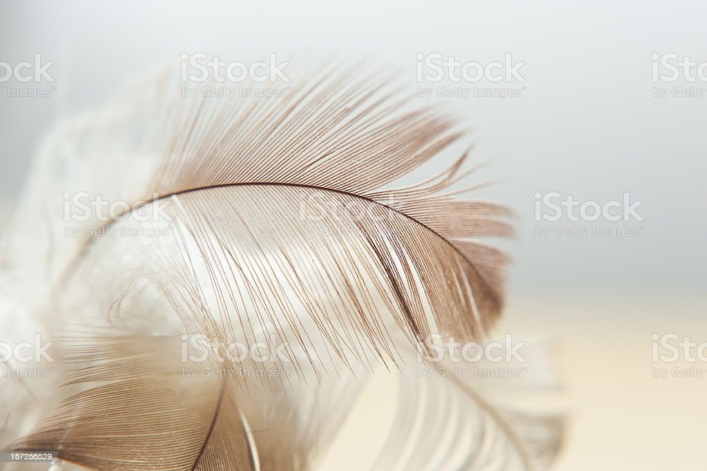 White And Brown Feathers Texture Background stock photo