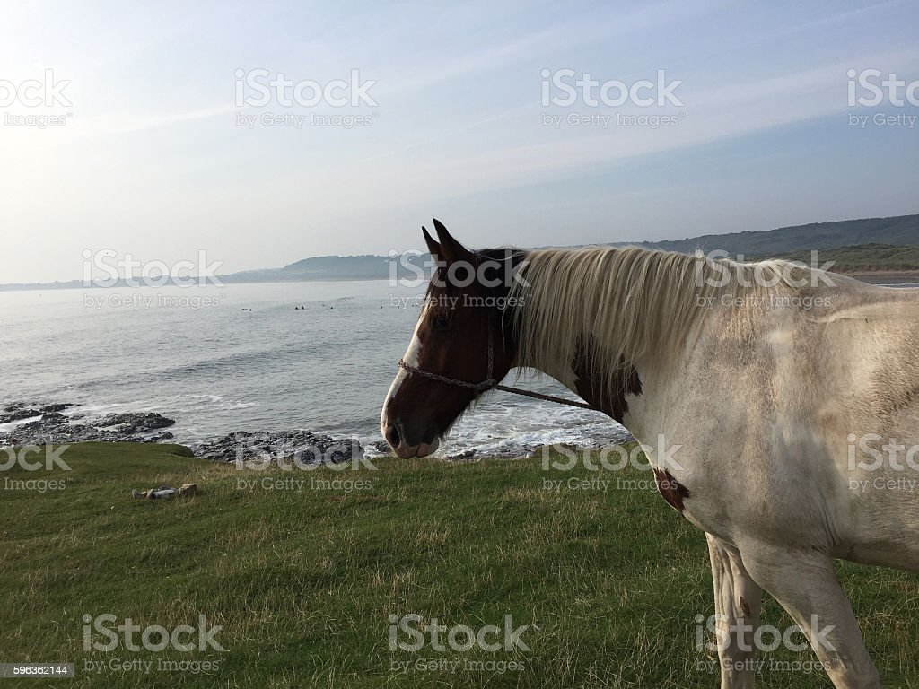 White and brown paint horse on coastline royalty-free stock photo