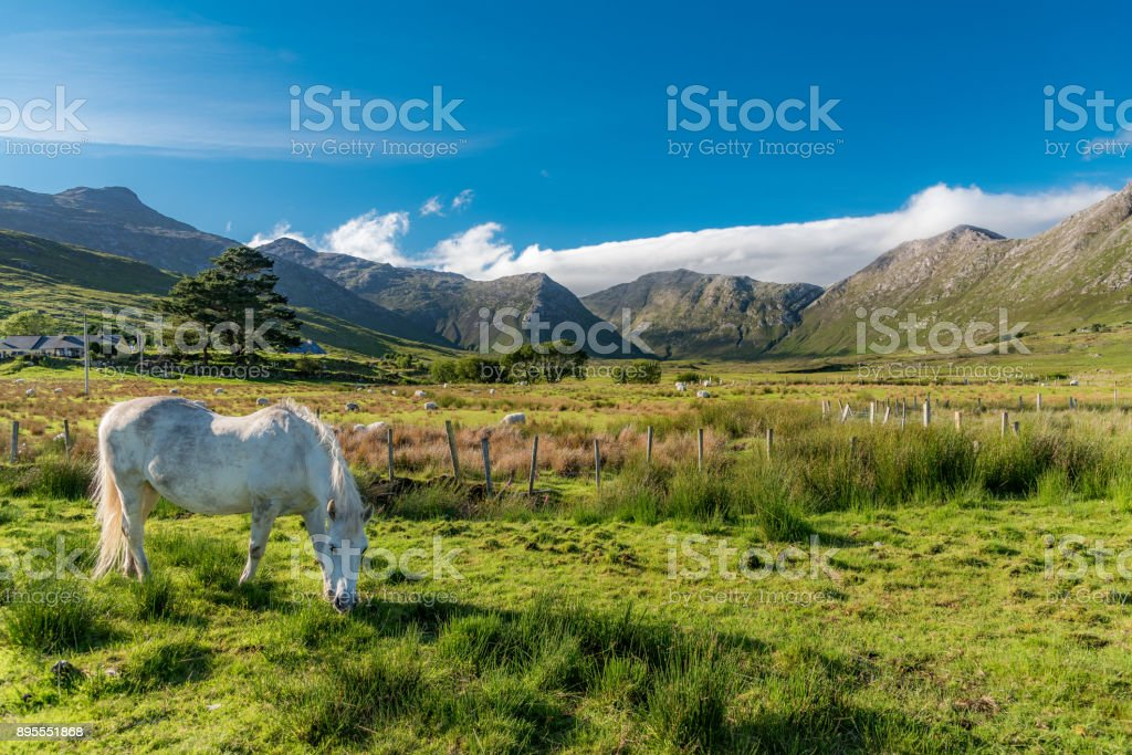 White and free horse stock photo
