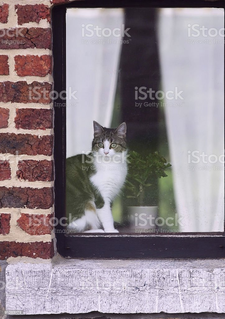 White and gray cat sitting in a windowsill stock photo