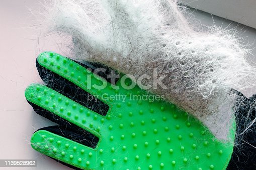 white and gray hair of cat or dog on a green glove after grooming, removal of wool domestic animal