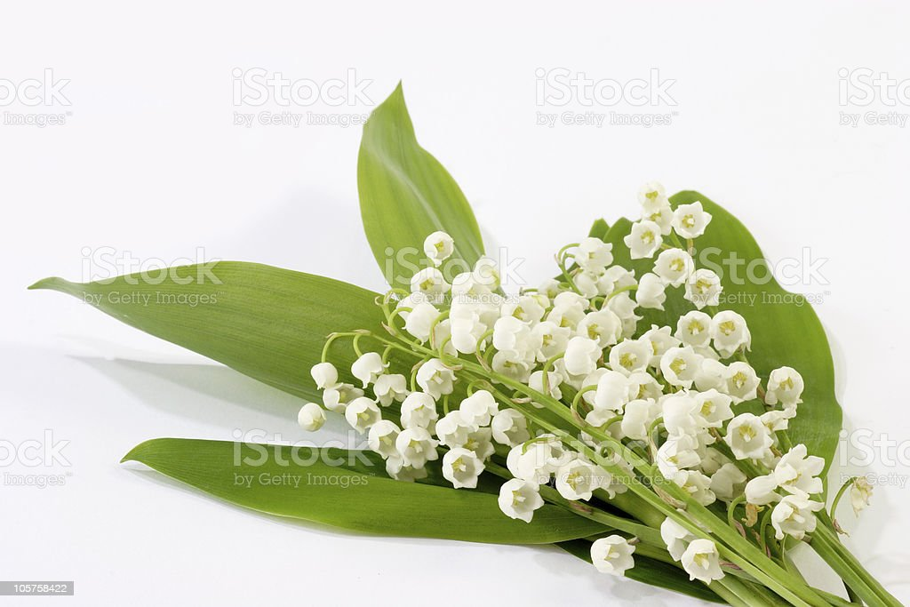 White and green spring flowers royalty-free stock photo
