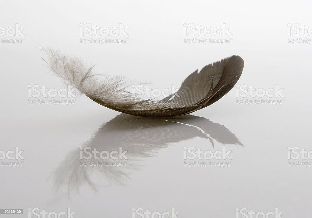 White and grey single feather on white background royalty-free stock photo