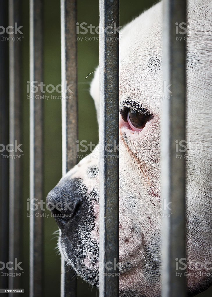 White and isolated dog's nose between grids stock photo