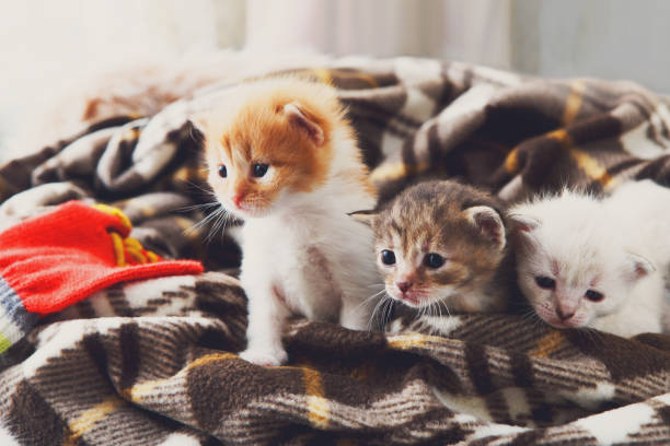 White and orange newborn kitten in a plaid blanket picture id840413276?b=1&k=6&m=840413276&s=612x612&w=0&h=vfg221ekwzfcby 5dphyqo0mc0vtklan0vislxu0qdg=