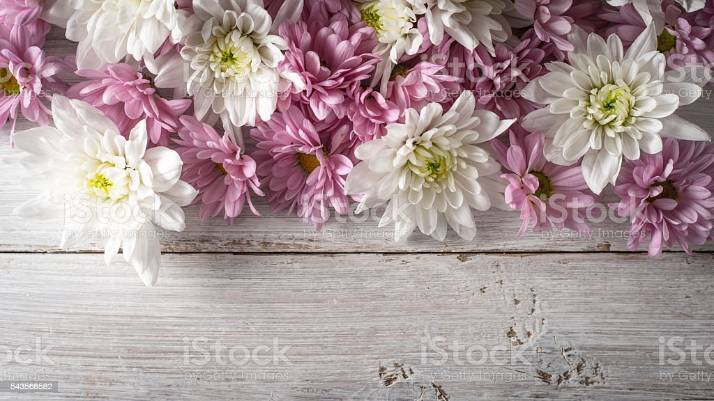 White and pink flowers on  white wooden background top view Lizenzfreies stock-foto