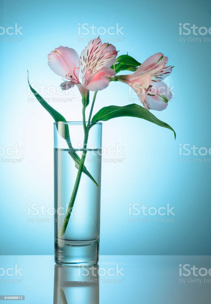 White and pink orchid flower in a high glass vase. Light background. stock photo