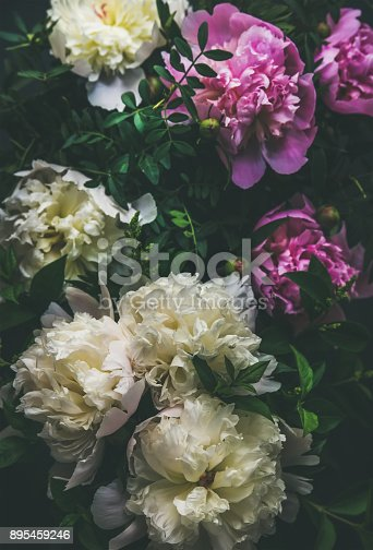 istock White and pink peony flowers over dark background, top view 895459246